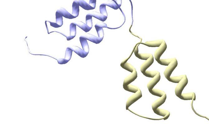 Affibody molecule